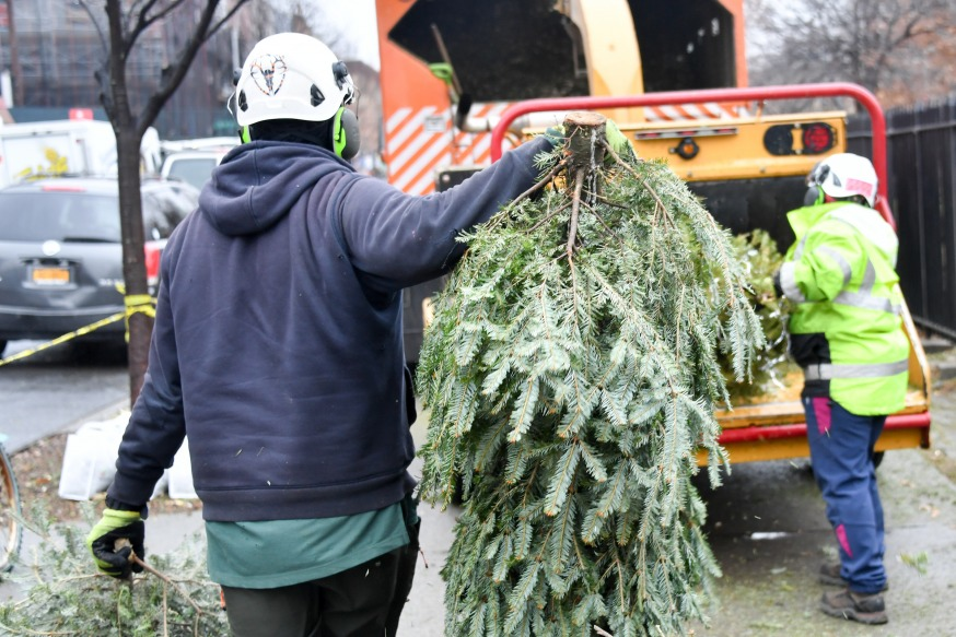Christmas Trees In Queens, Ny 2021 Turn Your Christmas Tree Into Mulch At City S Annual Mulchfest Queens Post